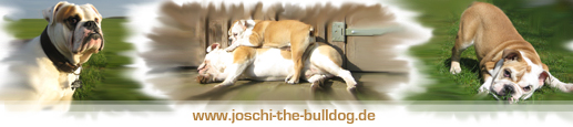 JOSCHI THE BULLDOG