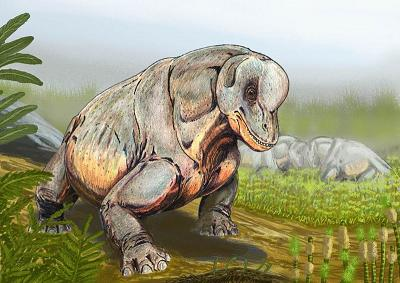 Tapinocephalus 6nd9-b6